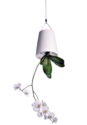 ape-orchidee_original
